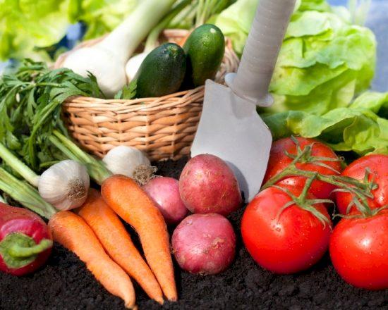 Festival verbouwt en verkoopt eigen groenten for Groenten tuin