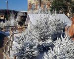 7theaven biedt ook deze winter sneeuwgarantie