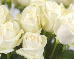 Eventplanner geeft bloemstukken tweede leven