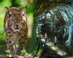 Ontdek wat de natuur met je doet op het Domein van de Grotten van Han