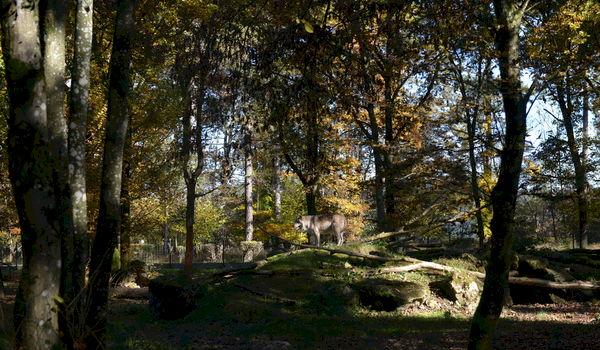 Neolitische teambuilding op een prehistorisch domein